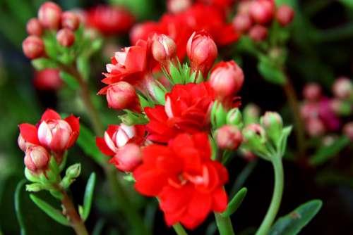 Flower Life Beautiful Flowers Flower Garden Petals
