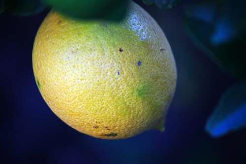 Close View Of Ripening Lemon