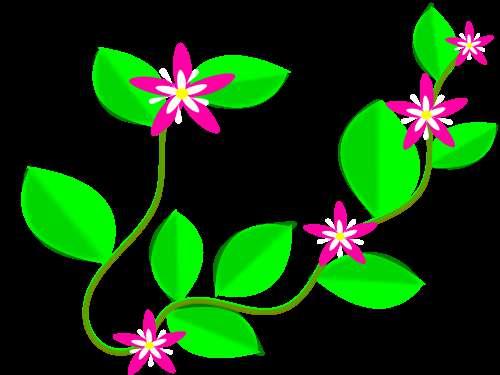Creeper Flower