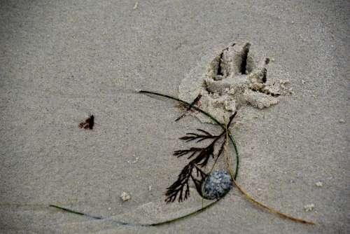 Dogprint Footprint In Sand