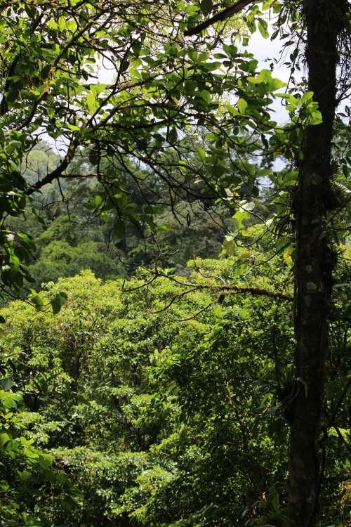 Costa Rica Jungle Forest