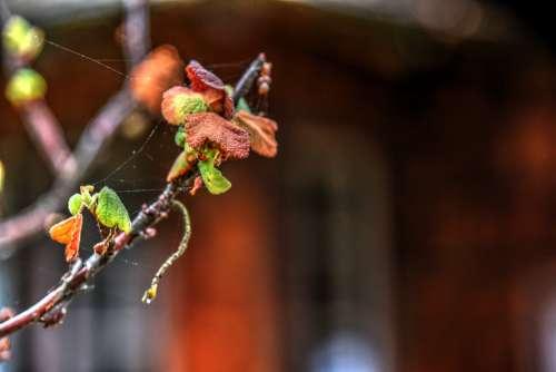 Plant And Cobwebs