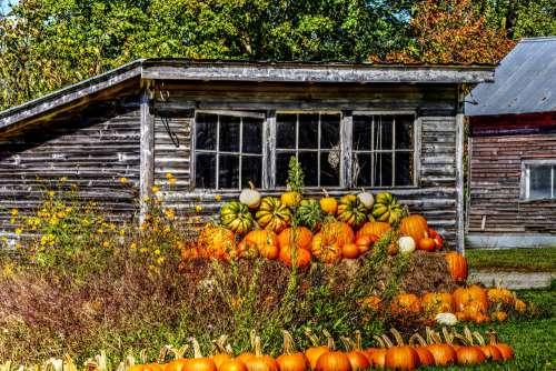 Pumpkin Shack