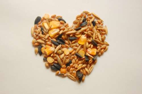 pet feed seeds corn wheat oats