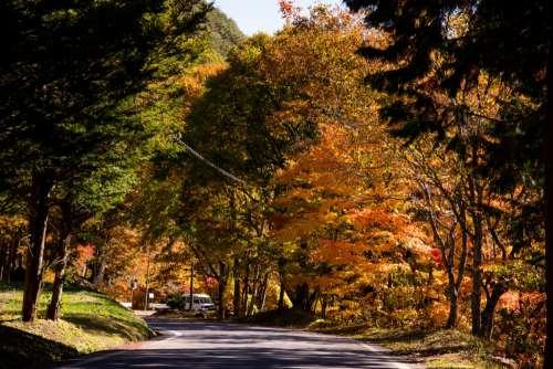 tree leaf nature natural landscape autumn