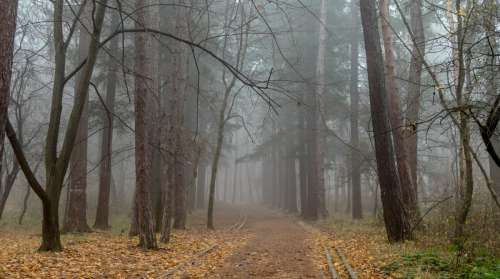 outumn leaves road forest fog