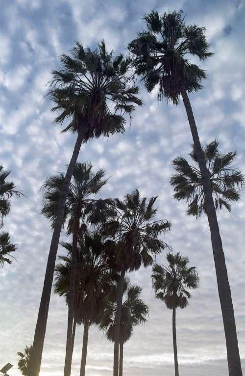 palm trees sky clouds sunshine