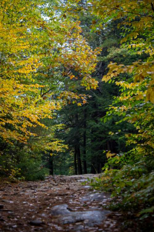 autumn woods nature forest hike
