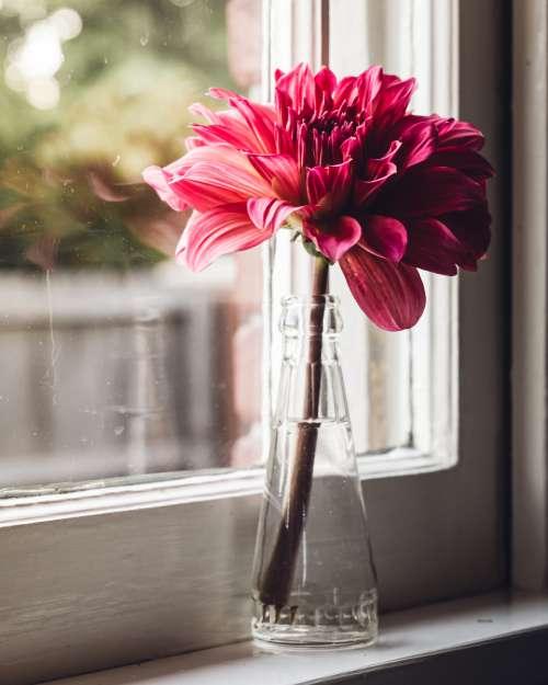 flower vase window plant glass