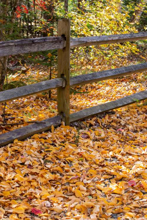 autumn leaves nature fence forest