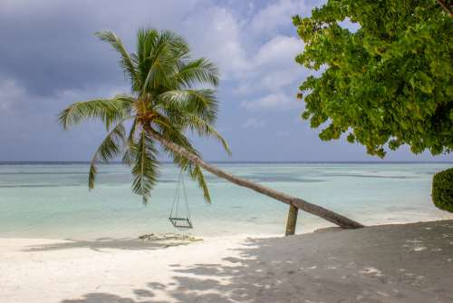 Empty Swing Hanging from a Palm Tree on a Tropical Beach