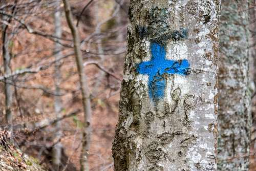 Blue Cross on a Tree Indicating a Forest Path