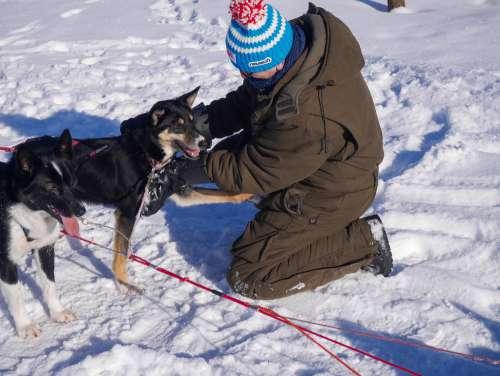 Man Petting a Sledge Dog