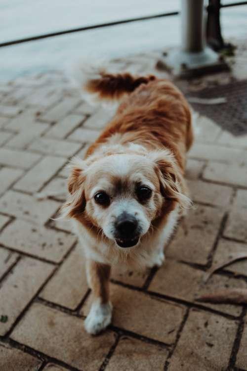 Happy Street Dog Photo