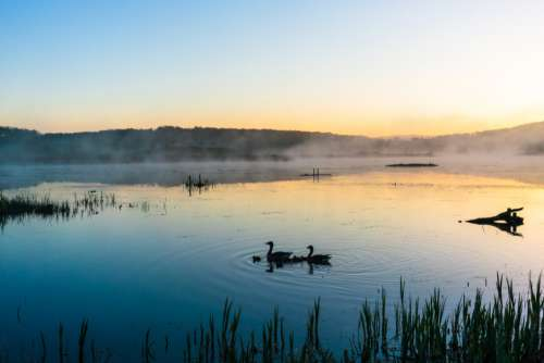 Lake Swans Dawn Free Photo