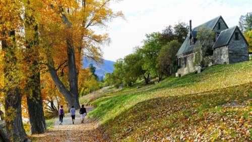 Autumn Tree Landscape Free Photo