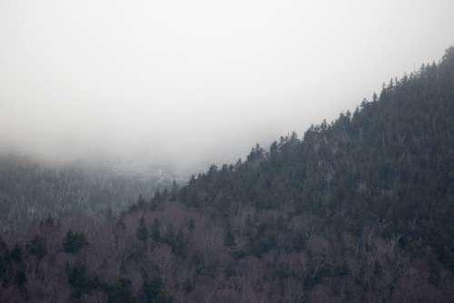 Fog Mountain Trees Free Photo