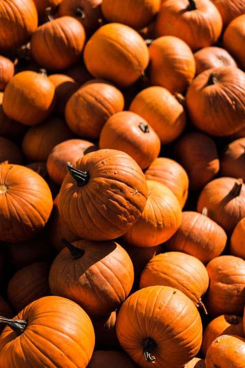 Pile of Pumpkins Vertical Free Photo