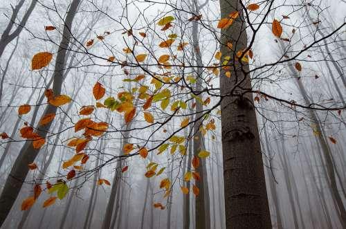 Autumn Leaves Fallen Forest Leaf Landscape Mood