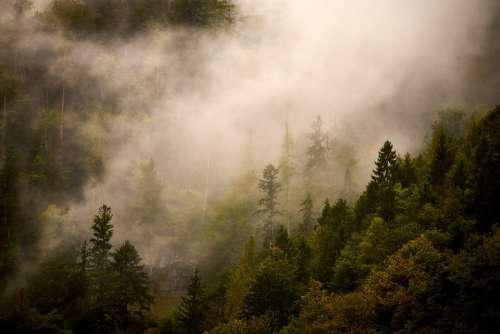 Nature Landscape Forest Clouds Fog Mood Trees
