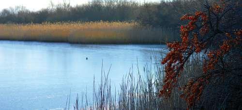 Speicherkoog Dithmarschen Nature Reserve Water