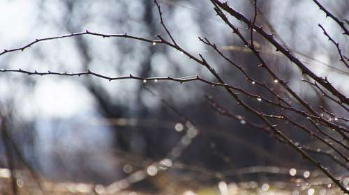 Aesthetic Branches Sun Drip Spring Melt Dewdrop