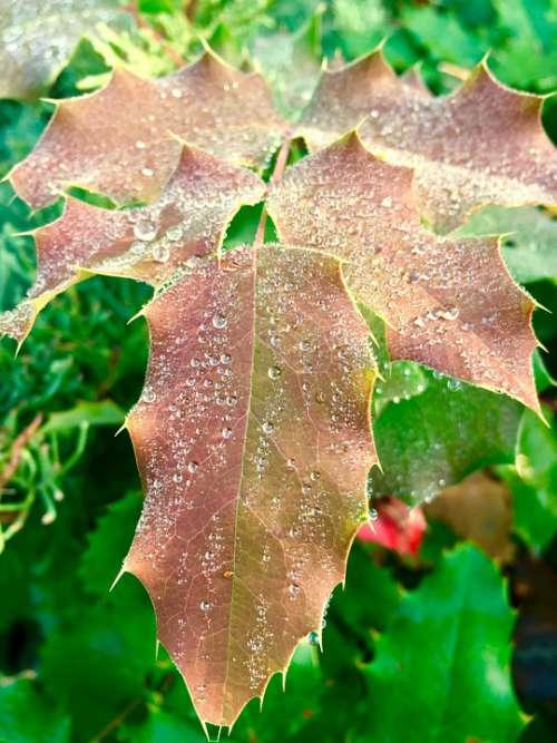 Dew Leaves Drop Drip Nature Macro Water Rain