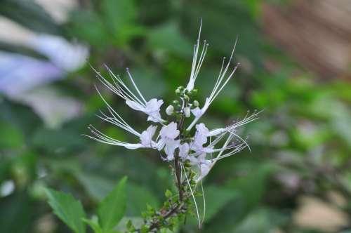 Beautiful Flower Cute Flower White Flower