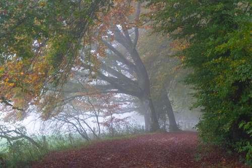 Trees Fog Autumn Forest Landscape Nature Secret