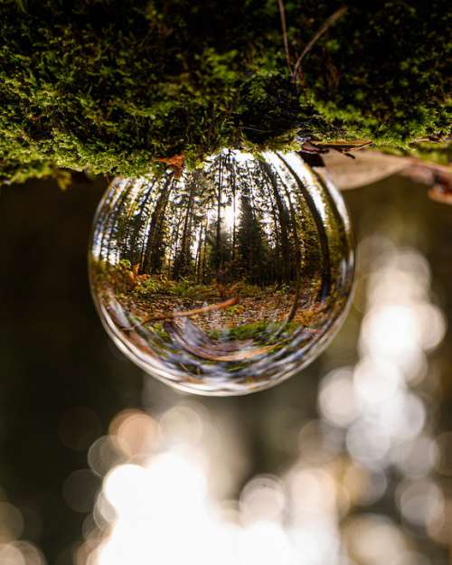 Glass Ball Forest Up Down Nature Reflection