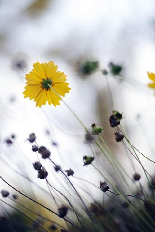 Autumn Yellow Flowers Nature Leaf Plants Park