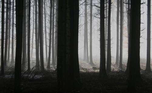 Forest Trees Fog Autumn Gloomy Mysterious