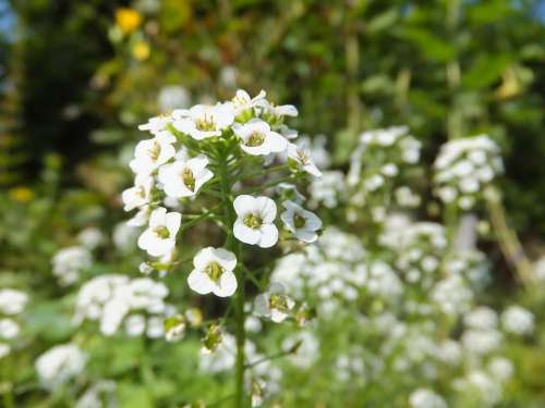 Flower White Small Cute Young Pretty Charming
