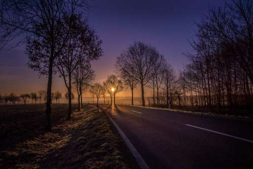 Road Sunrise Trees Avenue Yellow Blue Lighting