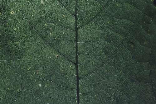 Leaf Chlorophyll Green Nature Plant Macro Garden