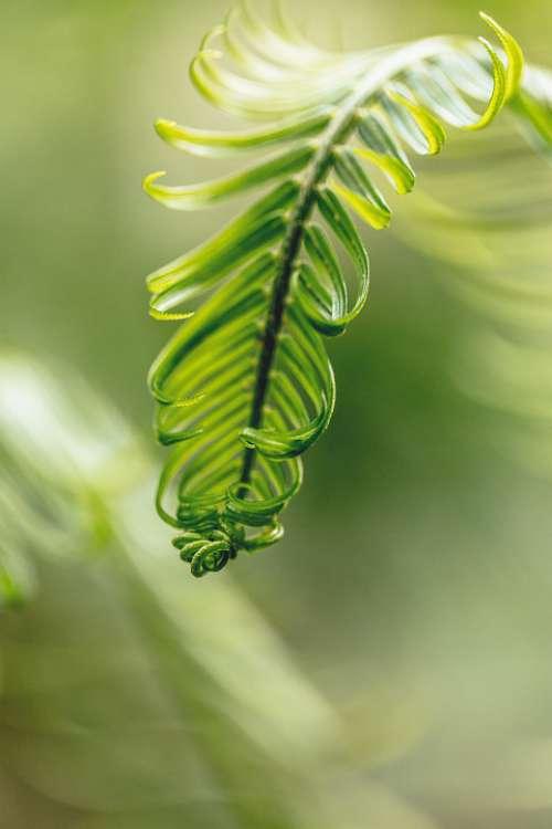 Leaf Plant Natural Green Environment Macro Bright