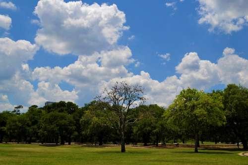 National Park Houston Texas Forest Trees Scenic