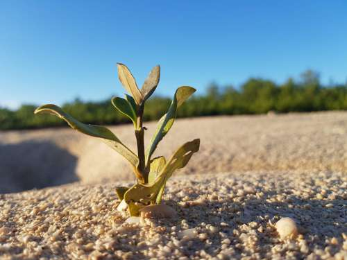 Mangrove Beach Alone Nature Sea Sand Island