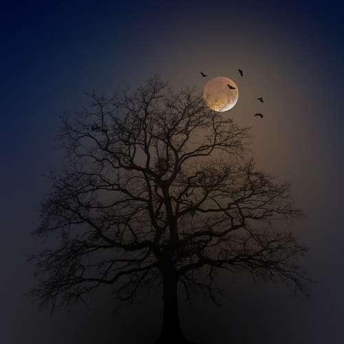 Halloween Tree Silhouette Moon Fog Bats Creepy
