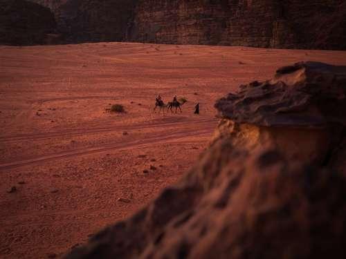 Camel Animals Desert Travel Sand Sahara Tourism