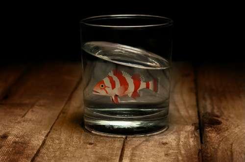 Fish Glass Water Swim Goldfish Bowl Animal