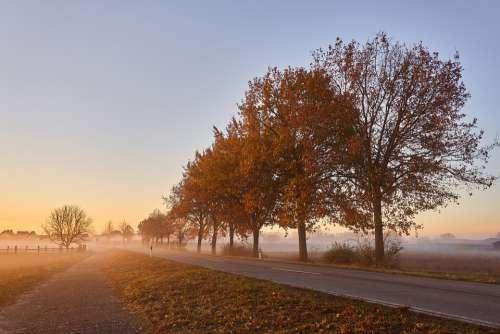 Road Fog Trees Autumn Leaves Autumn Colours