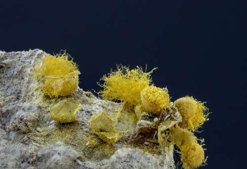 Slime-Mold Spores Threads Yellow Micro Macro Tiny