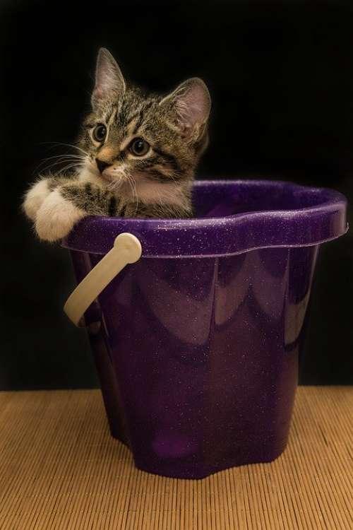Cat Small Mackerel Kitten Domestic Cat Pet Cute