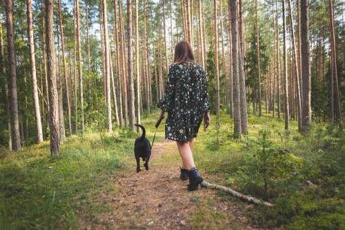 Dog Nature Forest Landscape Animal Walk Autumn