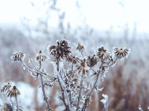 Winter Landscape Snow Nature Grass Coldly Cold