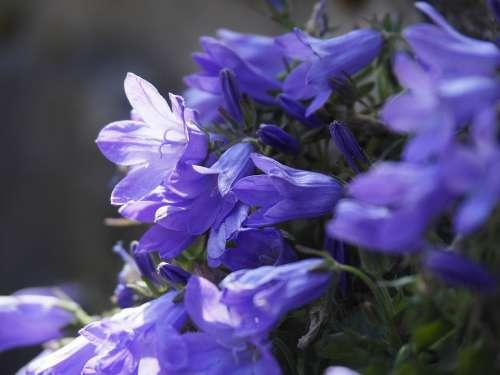 Nature Flower Purple Flowers