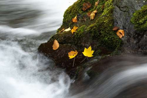 Landscape Autumn Torrent Rock Moss Fallen Leaves