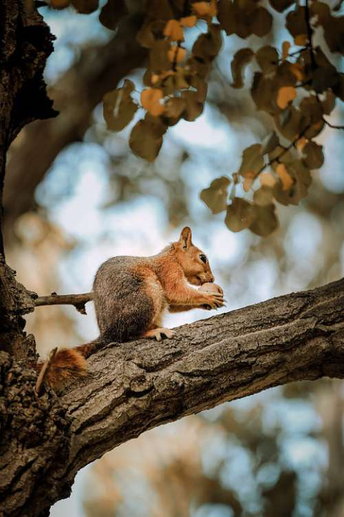 Animal Squirrel Tree Nature Wild Beautiful Nut