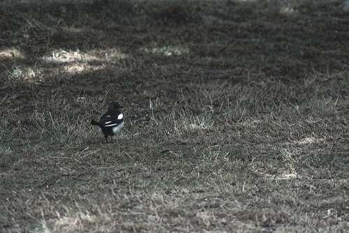 The Magpie Magpie
